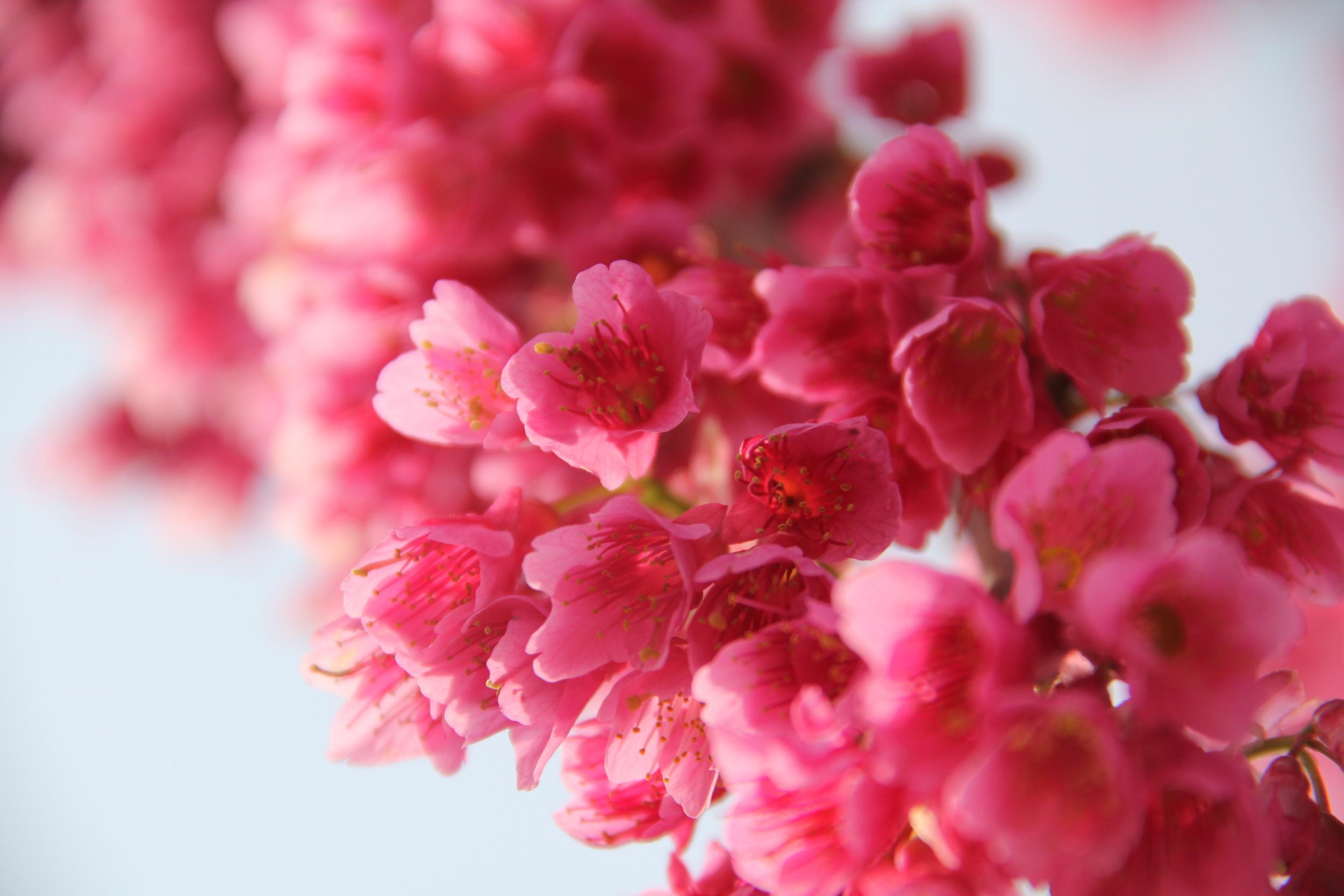 4-9-14 Blossom 9.JPG
