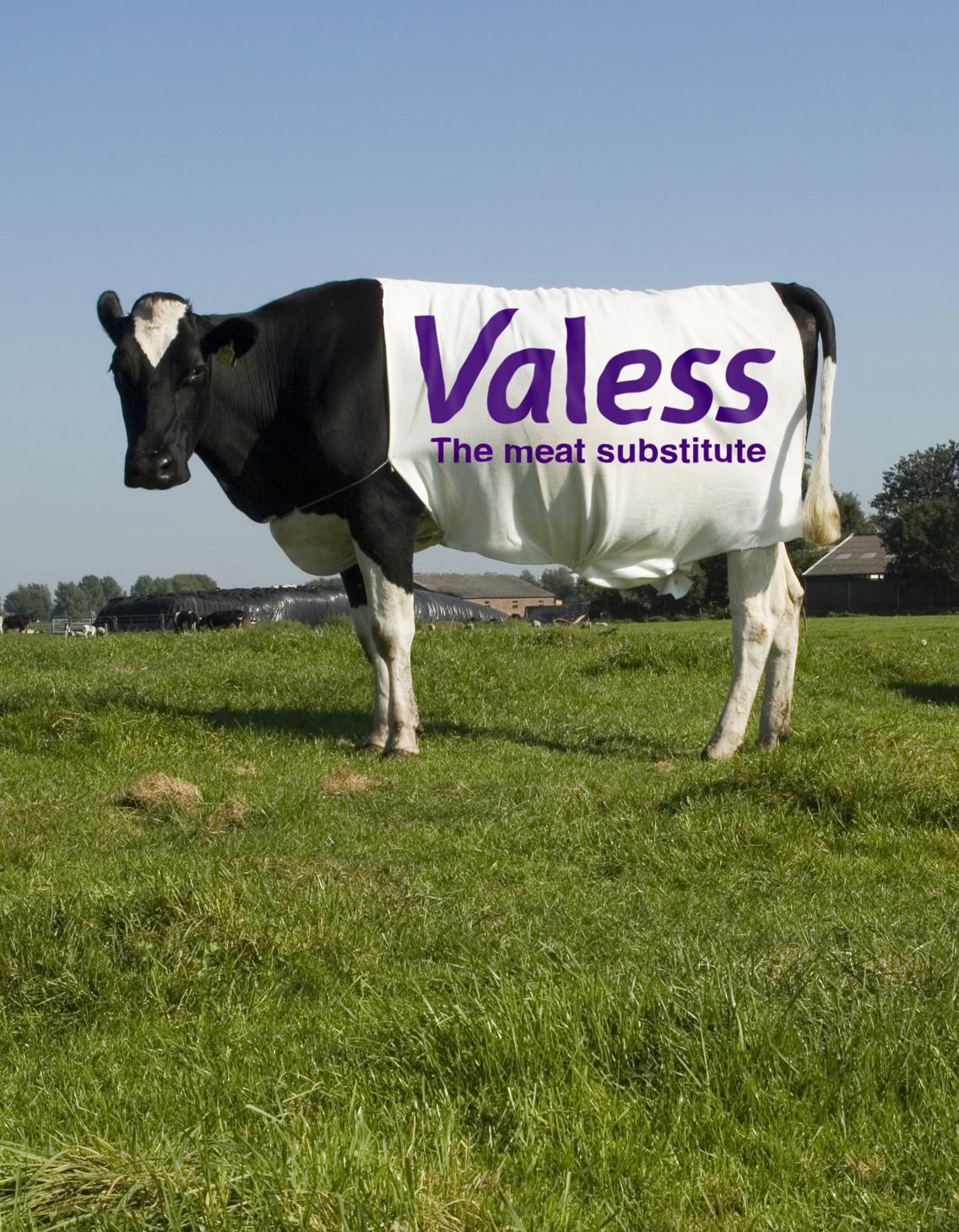 Valess lone cow GB su#2248E.jpg