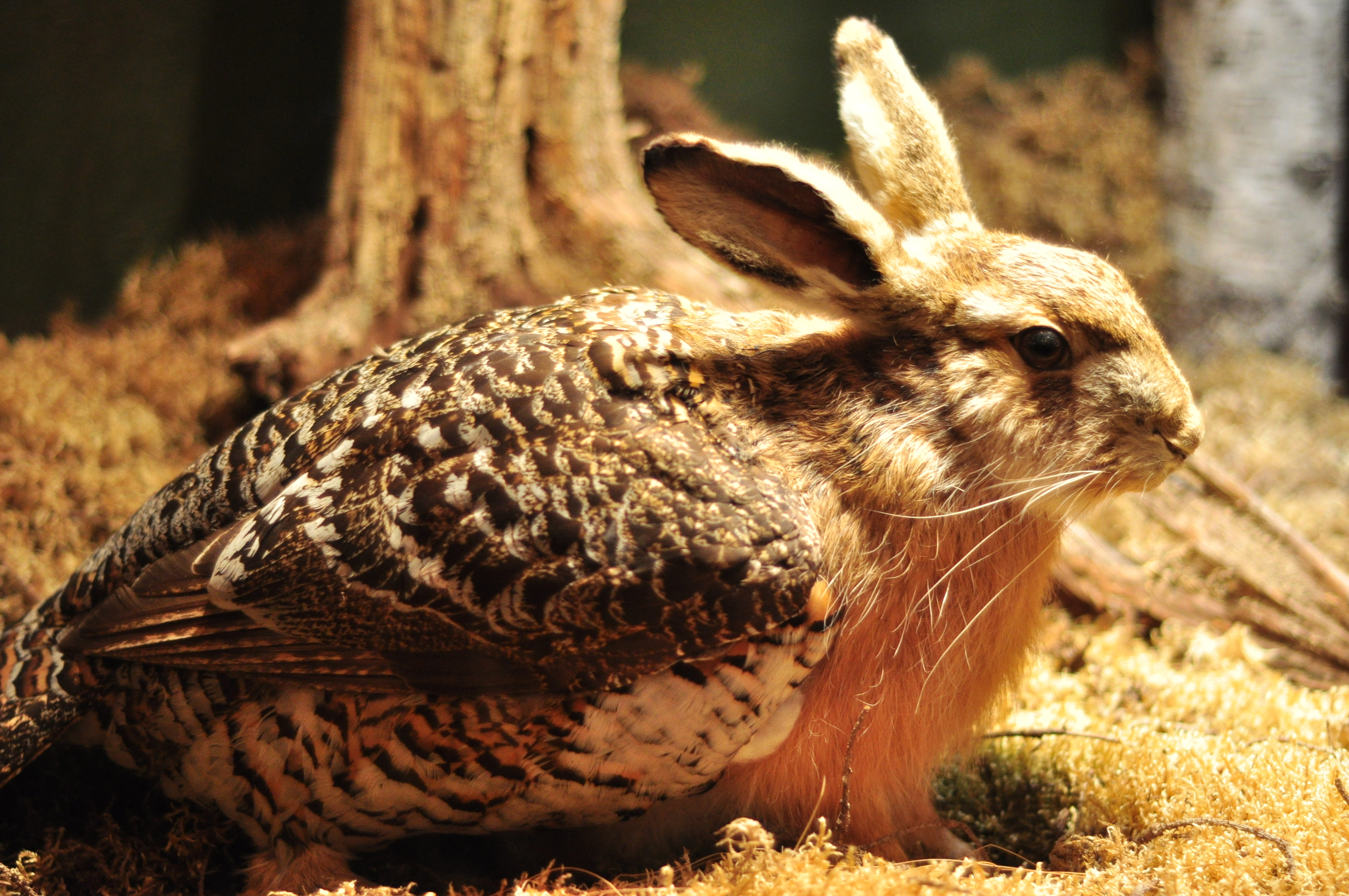 A skvader: a taxidermy cross between a hare and a grouse. Photos: Jo Keeling