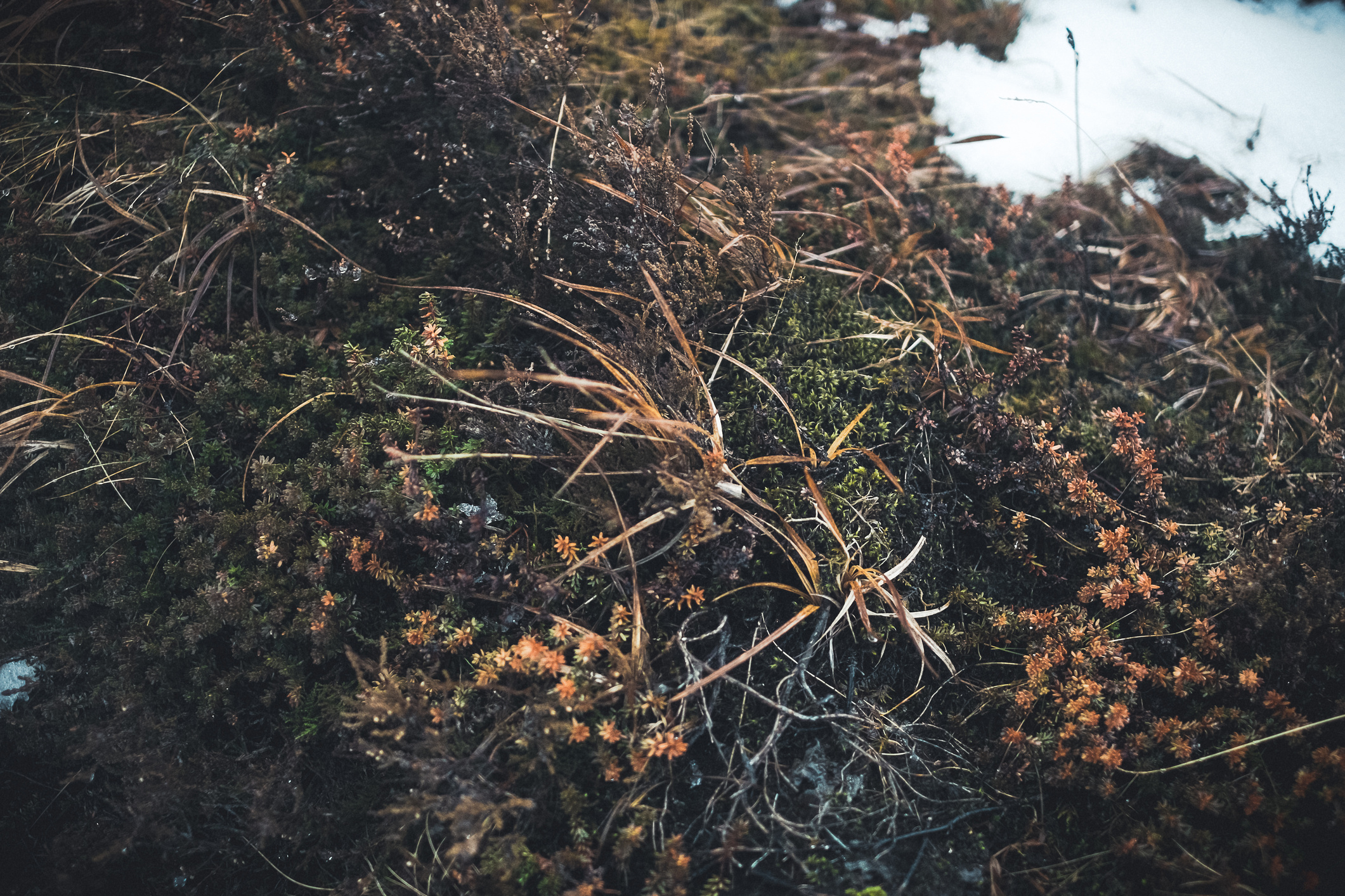 textures_of_iceland-34-(ZF-5665-08154-1-034).jpg