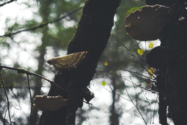 fungi3.jpg