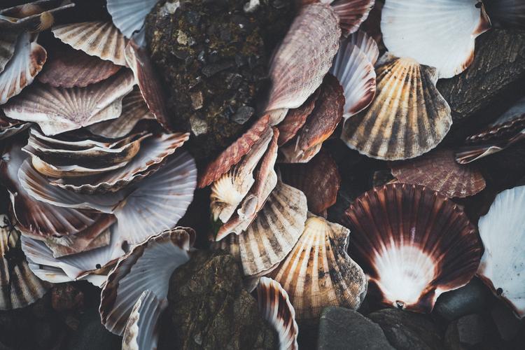 oysters5.jpg