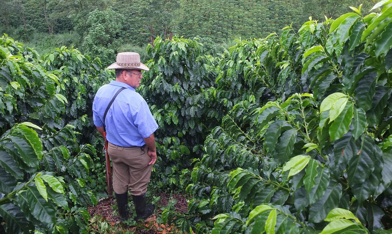colombian farmer.JPG