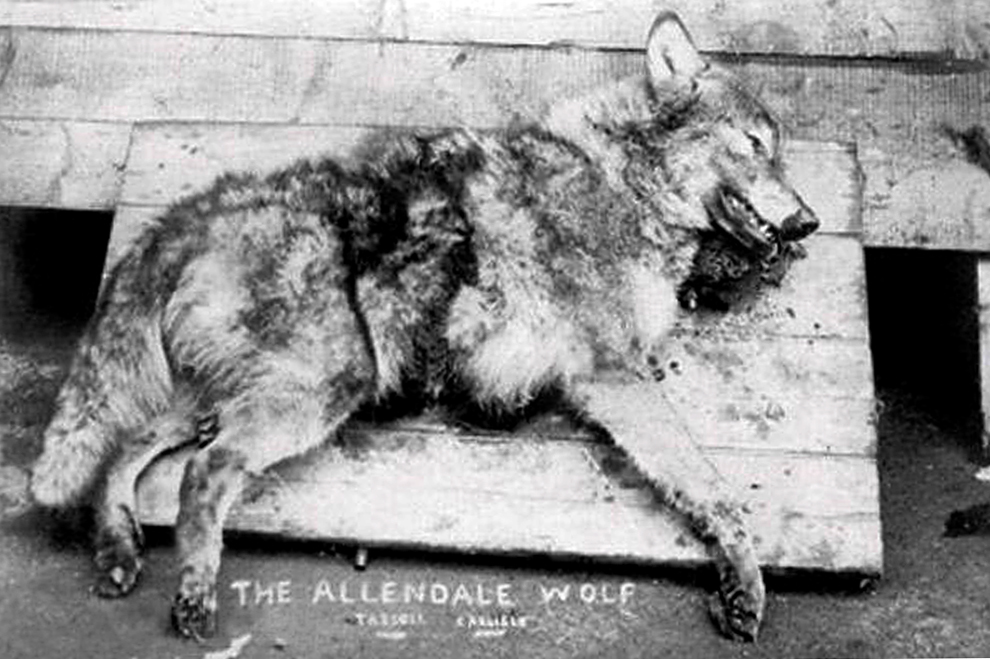 The Hexham Wolf, also known as The Allendale Wolf