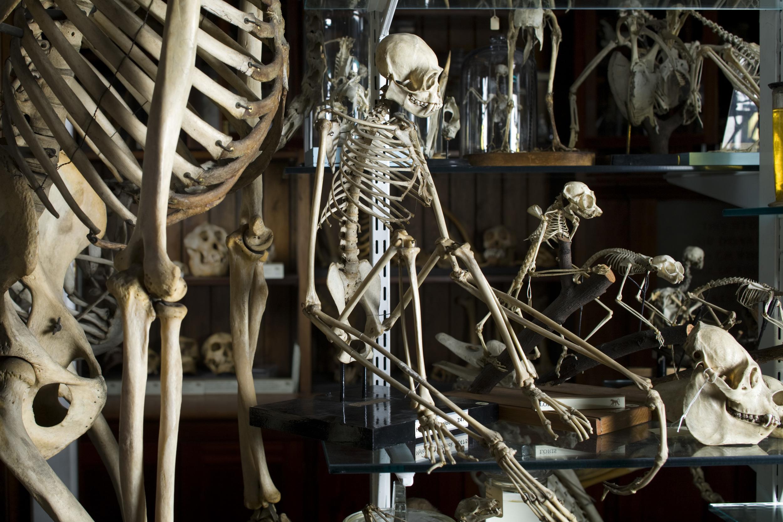 © UCL Grant Museum of Zoology/Matt Clayton