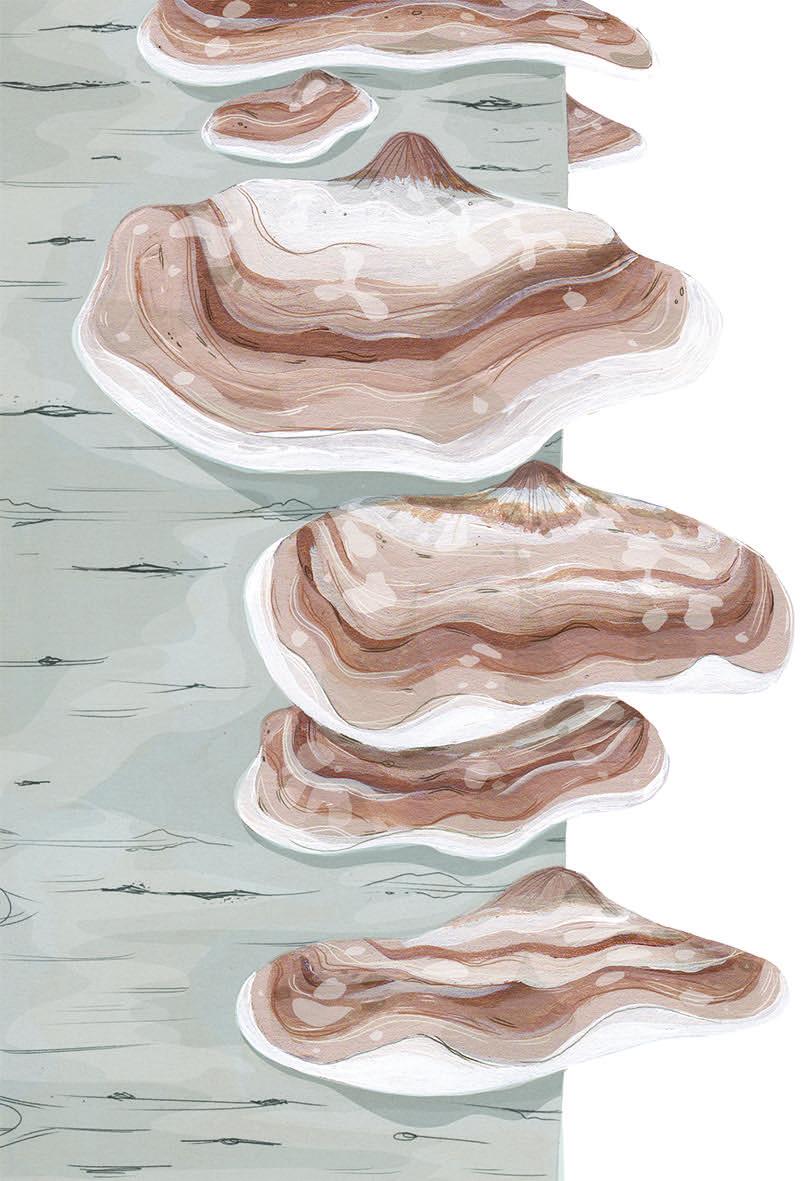 Illustration:  Ruth Allen/Blue Eggs & Tea