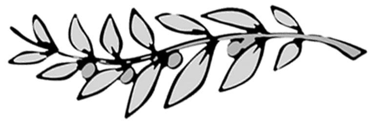 Olive Branch - Charcoal .jpg
