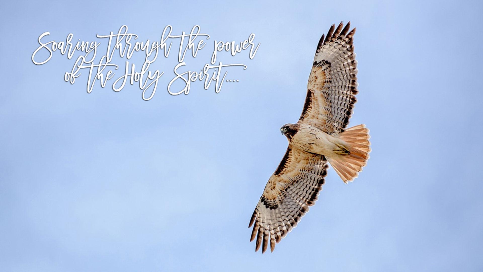 Soaring_Eagle-Wide.jpg