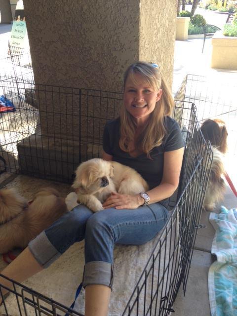 Peke Wrangler Jami volunteers at an adoption event.