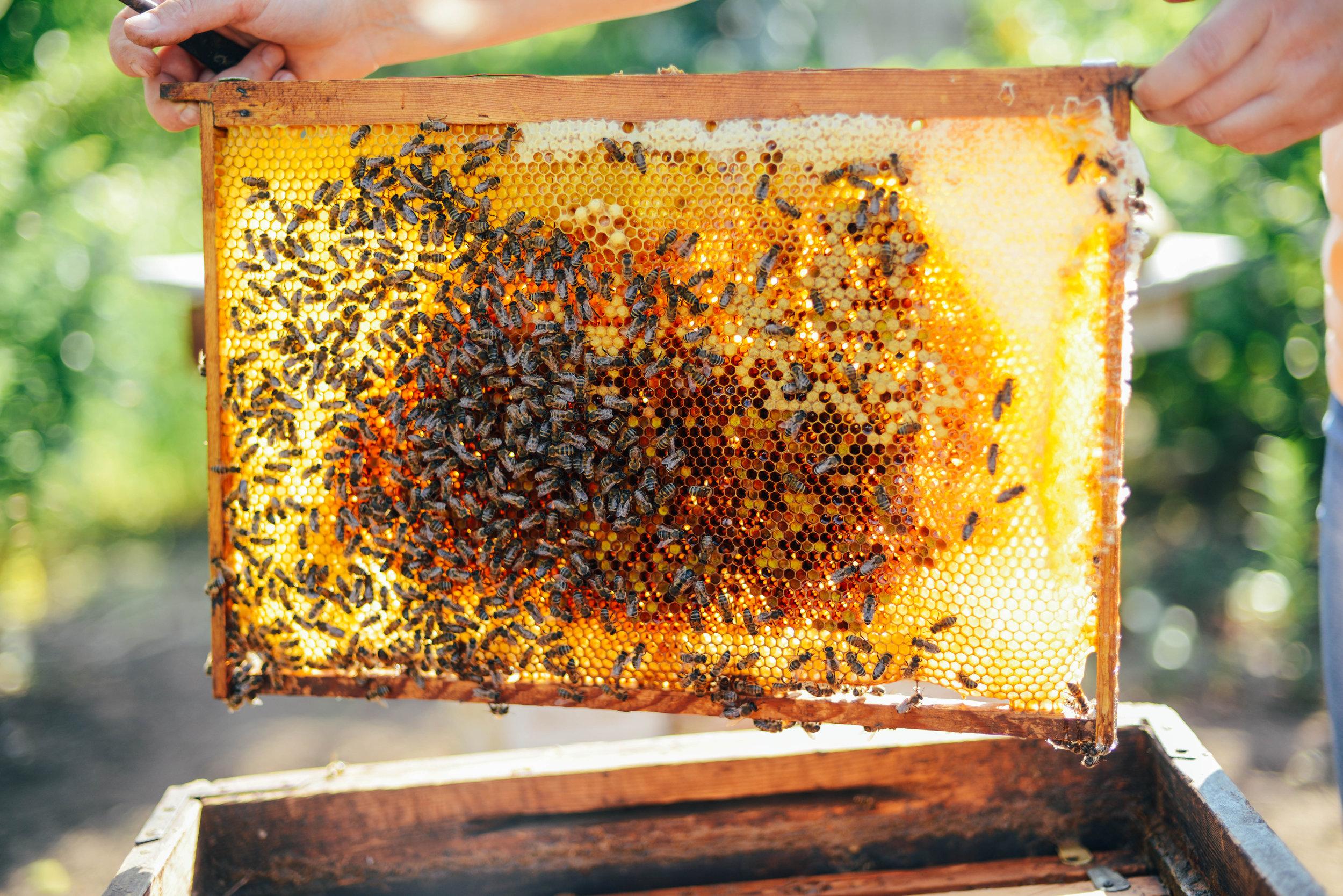 bigstock-Frames-Of-A-Bee-Hive-Beekeepe-194932189.jpg