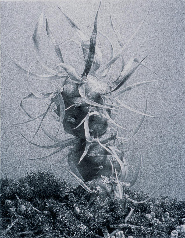 Wild, 2003