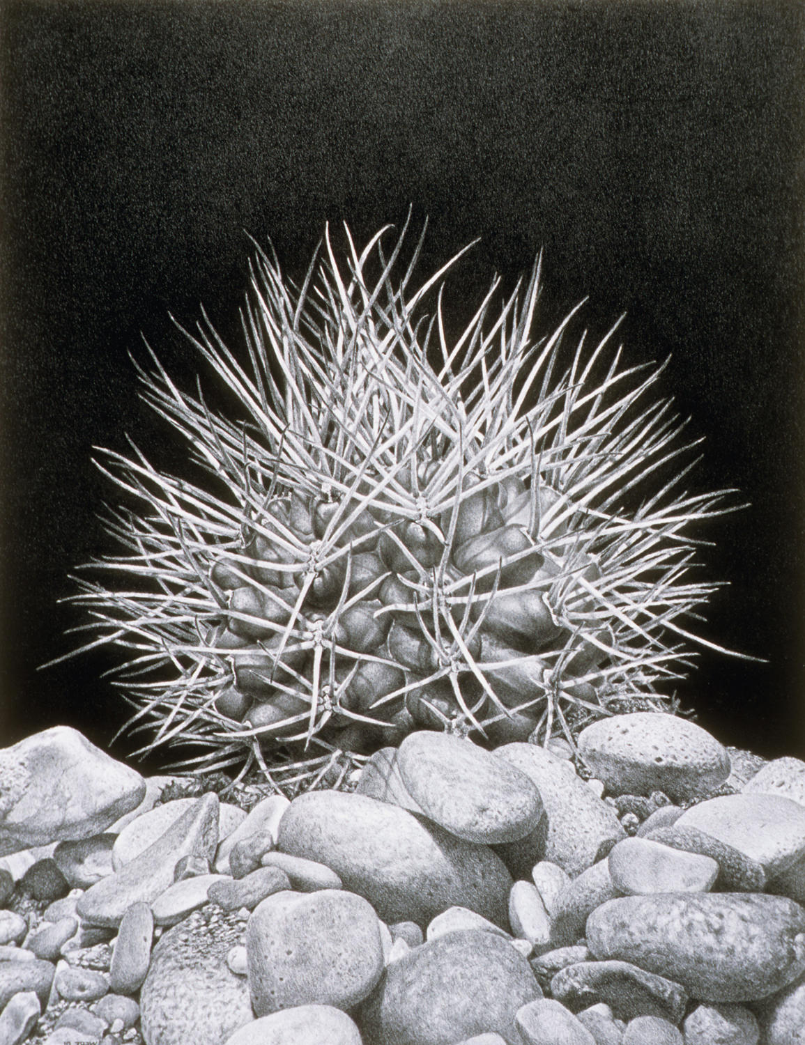 Spiked, 2002