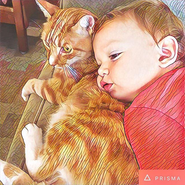 Sweet boy and his cat. #pierrebear #montmartrelechat #catsofinstagram #orangetabby #gingerbuddies #prisma
