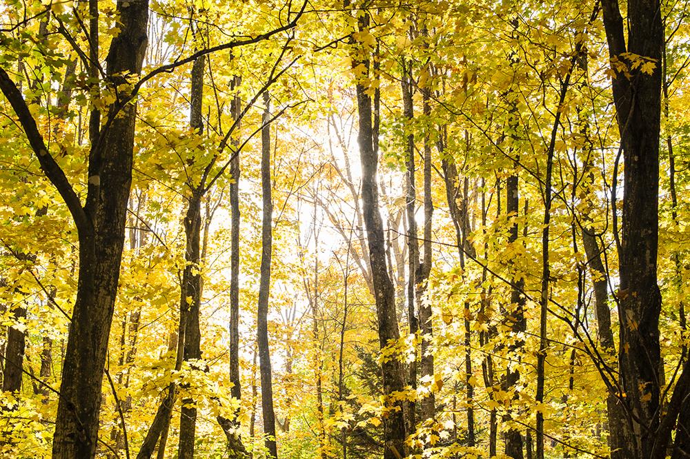 TNC_WorkingForests_09.jpg