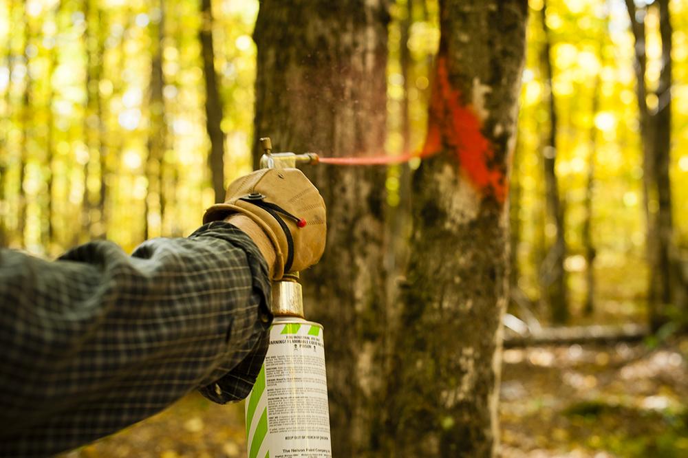 TNC_WorkingForests_10.jpg