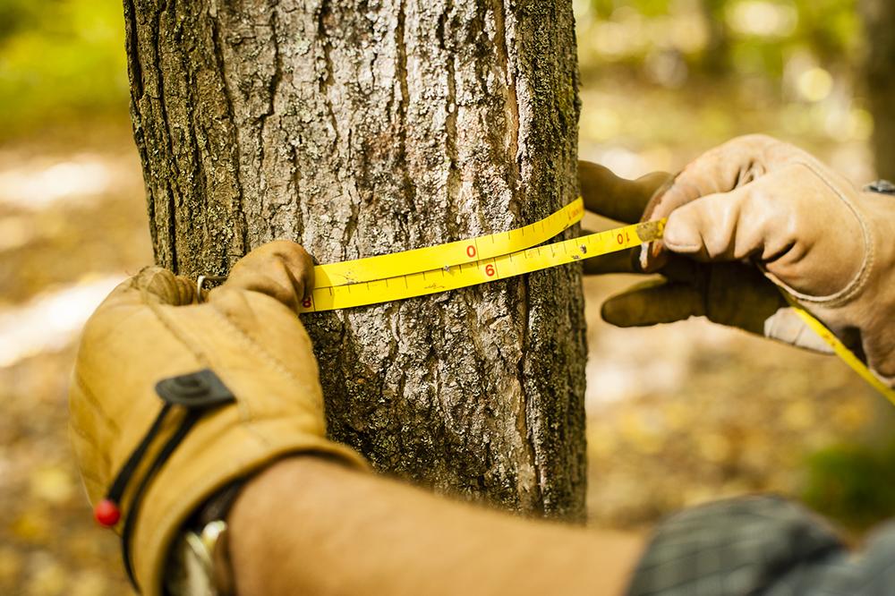 TNC_WorkingForests_12.jpg