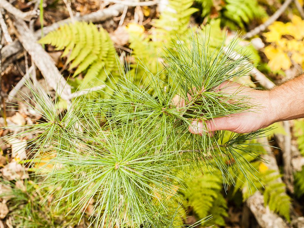TNC_WorkingForests_15.jpg