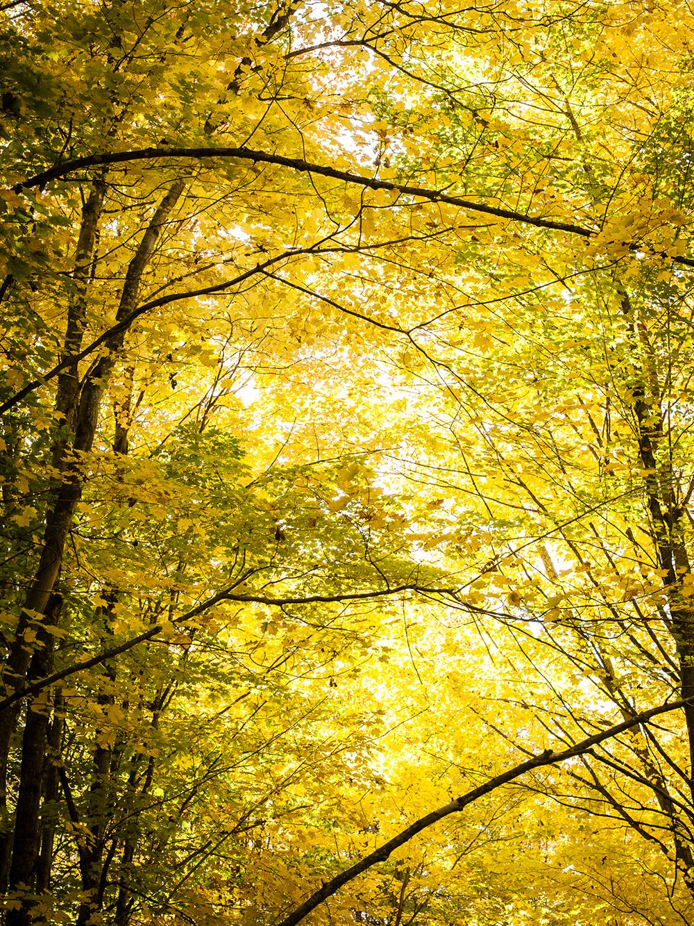 TNC_WorkingForests_17.jpg