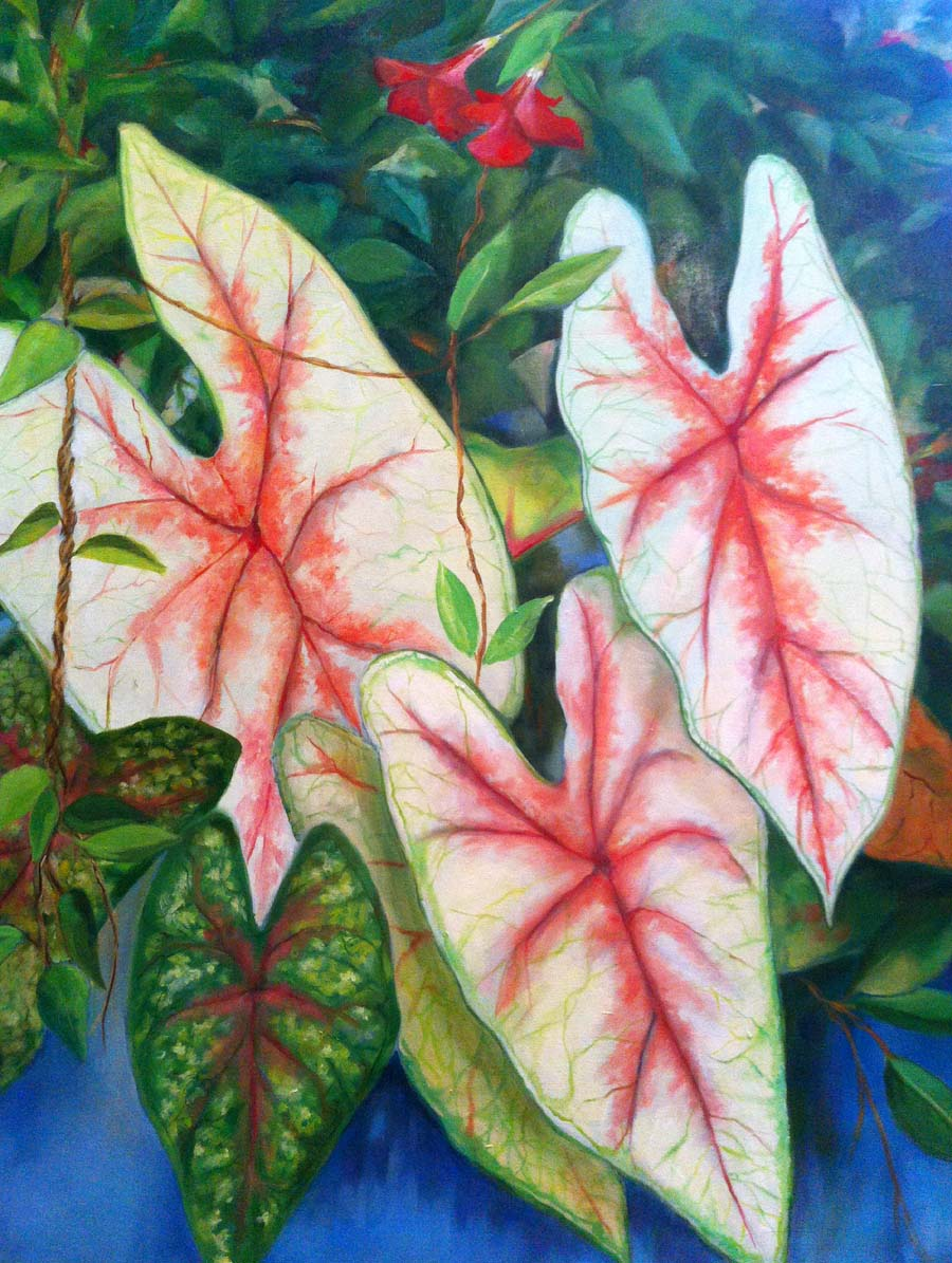 Caladium Flowers