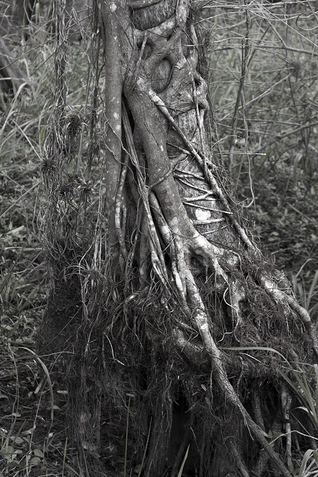 Everglaze                  .jpg