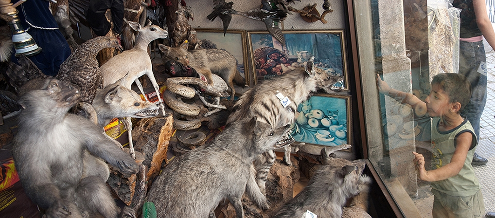 Syrian Boy at Taxidermy Store, Damascus