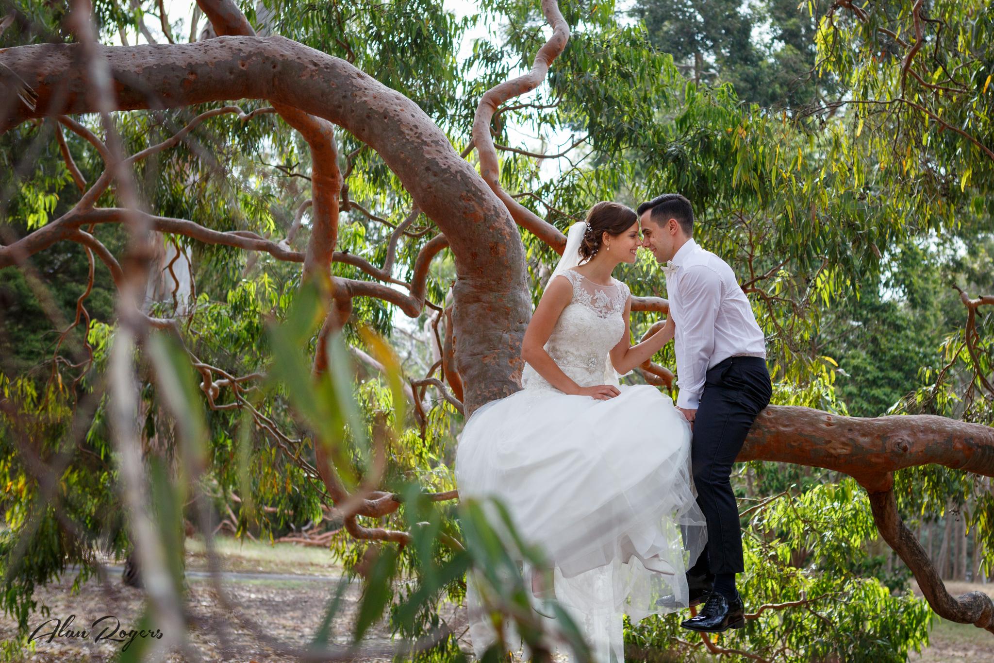 bride-groom-up-in-a-tree.jpg