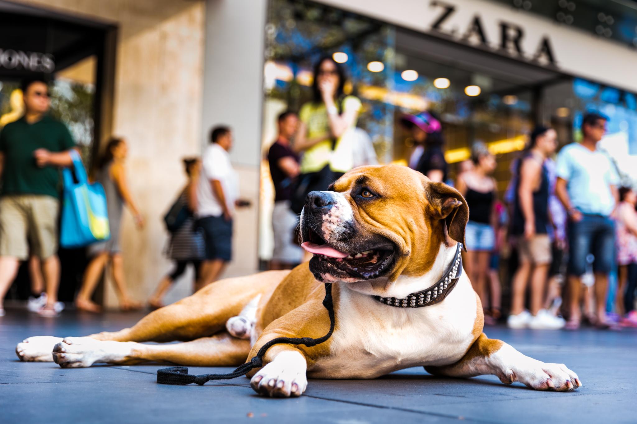 street-dog-zara.jpg