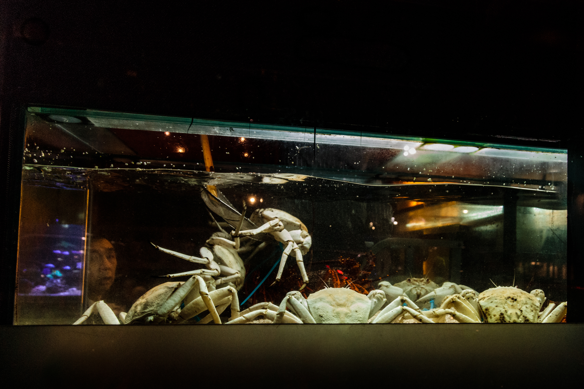 live-lobsters-for-sale.jpg