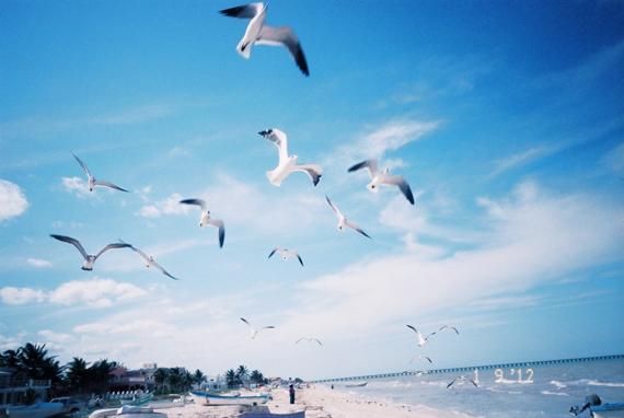 坎昆的海景,像麵粉一樣細白的沙灘上到處都有海鷗和海鳥,很多小隻的海鳥會在沙子上跳來跳去