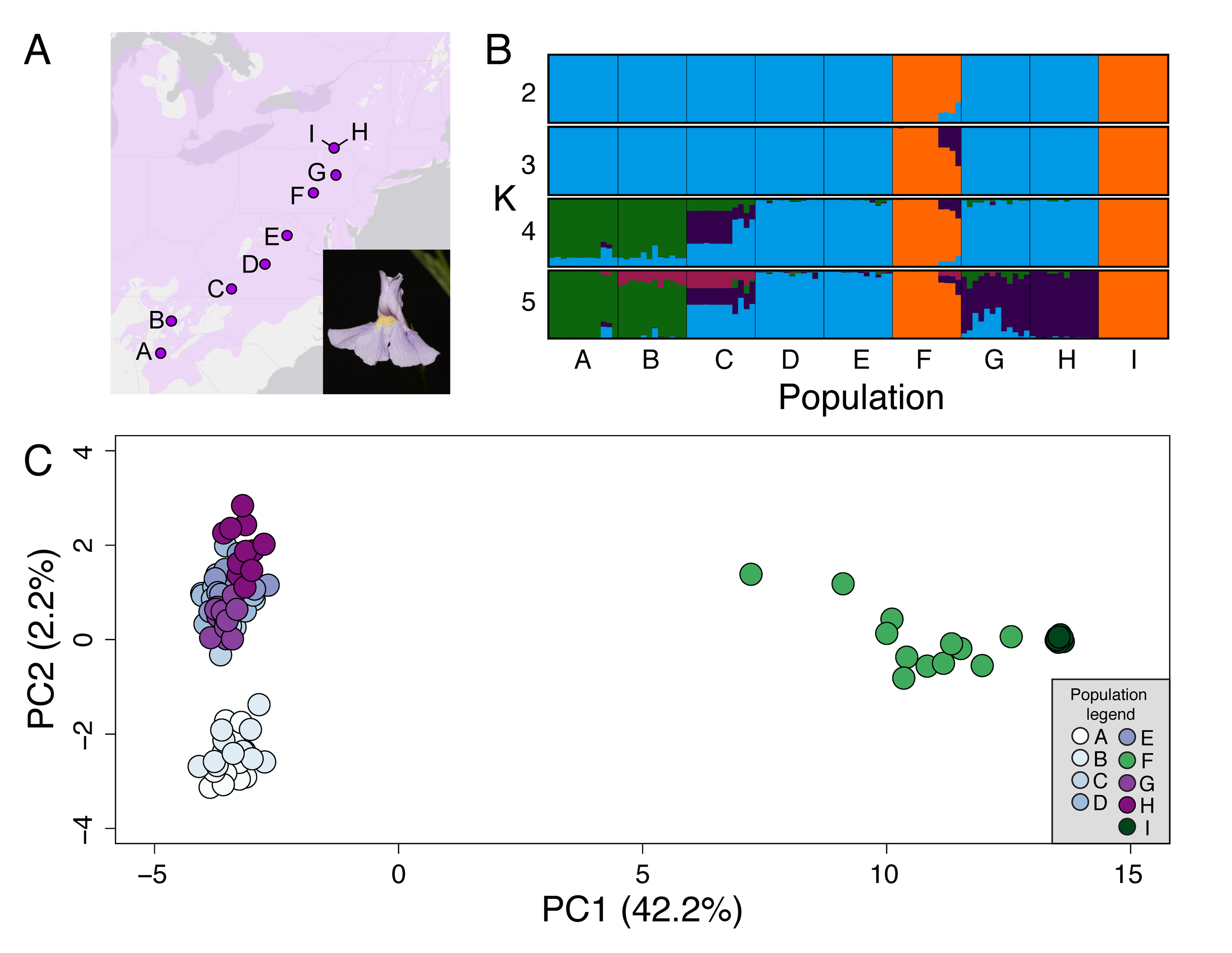 Cryptic life history diversity in  M. ringens . A) A series of 9 populations spanning a wide range of latitude are represented by populations A-I. Variation in response to flowering time and population genomic structure (STRUCTURE plot in panel B and PCA in panel C) suggest that populations F and I are an 'annual-like' transition in life history from the typically perennial species.