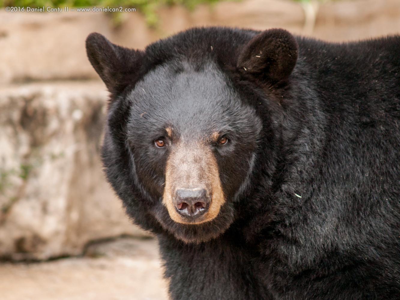Daniel-Cantu-II-Zoo-March-2015-7.jpg