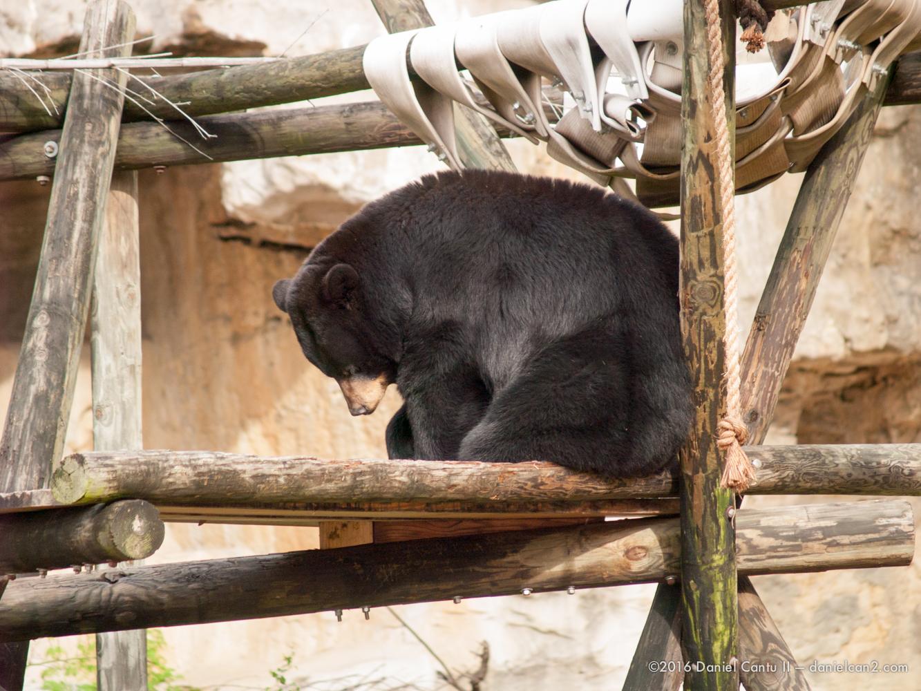 Daniel-Cantu-II-Zoo-March-2015-8.jpg