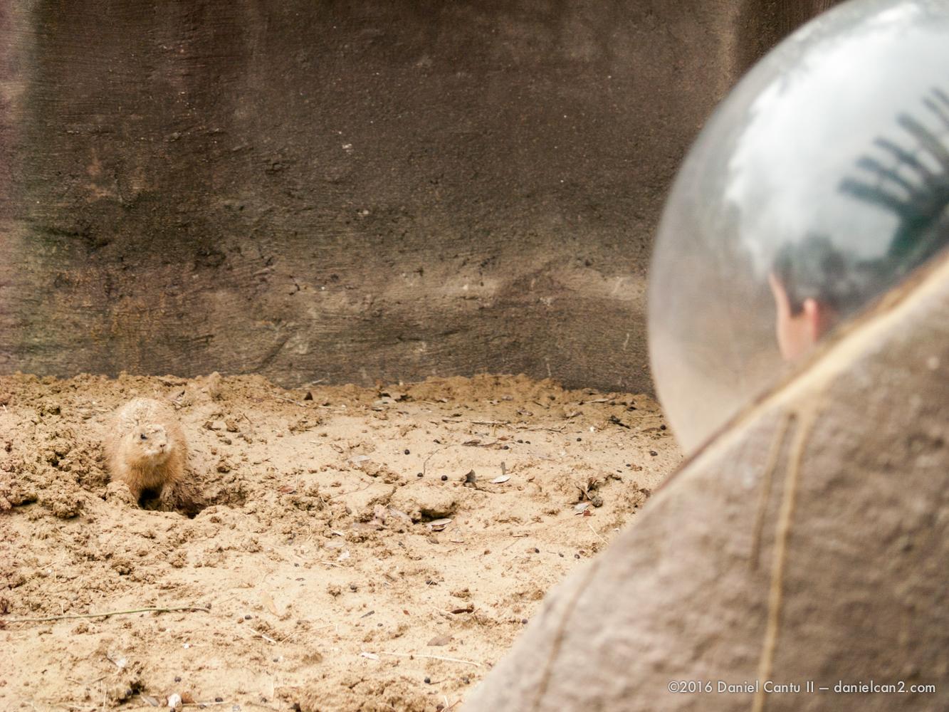 Daniel-Cantu-II-Zoo-March-2015-10.jpg