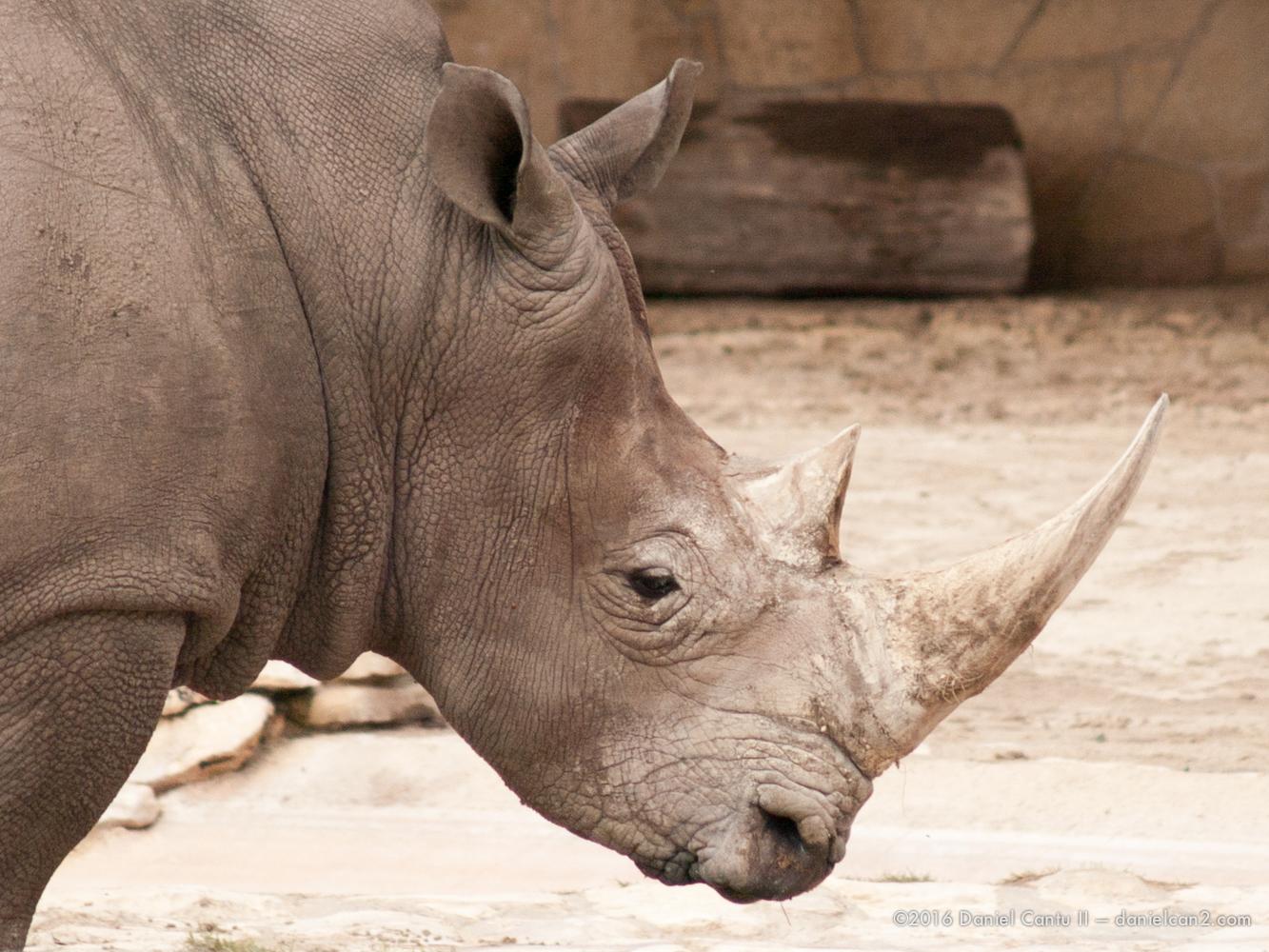Daniel-Cantu-II-Zoo-March-2015-12.jpg