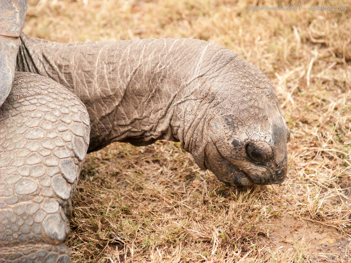 Daniel-Cantu-II-Zoo-March-2015-14.jpg