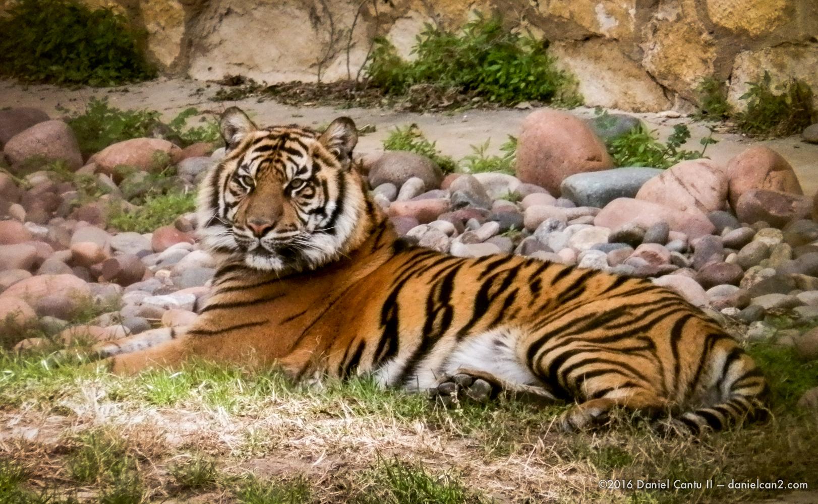 Daniel-Cantu-II-Zoo-SA-TX-2015-2.jpg