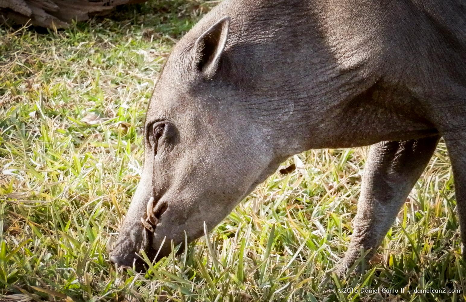 Daniel-Cantu-II-Zoo-SA-TX-2015-5.jpg