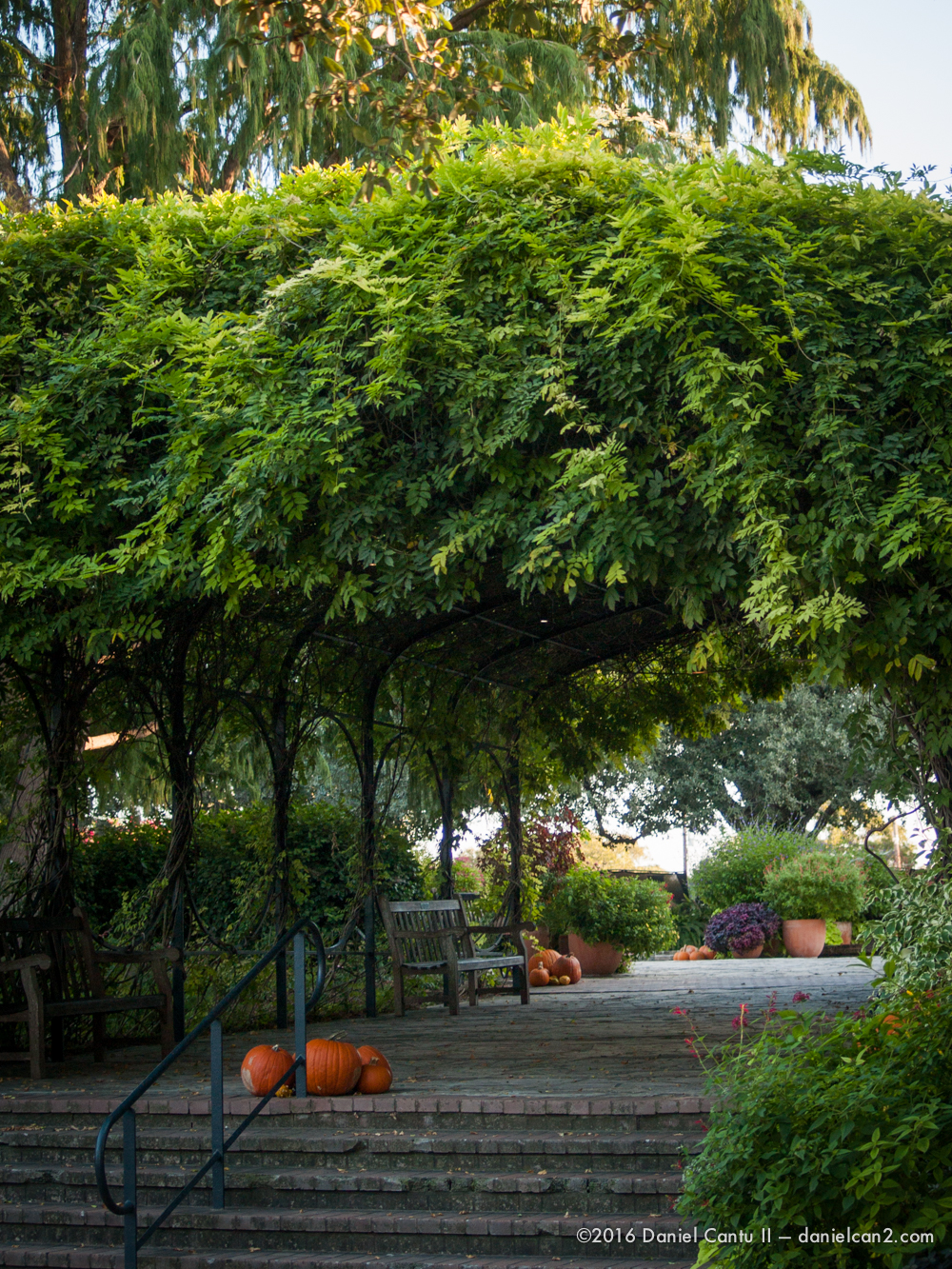 Daniel-Cantu-II-Botanical-Gardens-Oct-2016-53.jpg