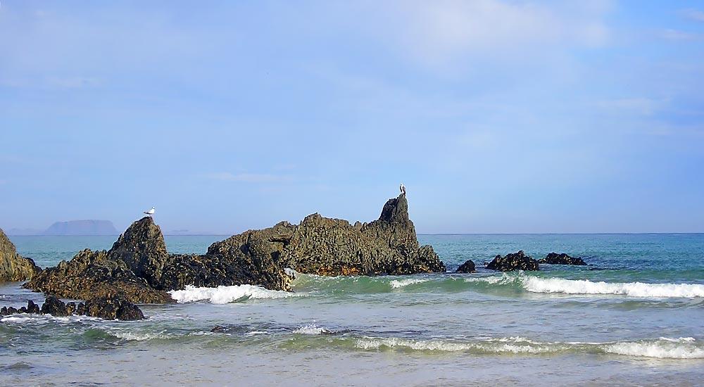 Sea Eagle on Whale Rock
