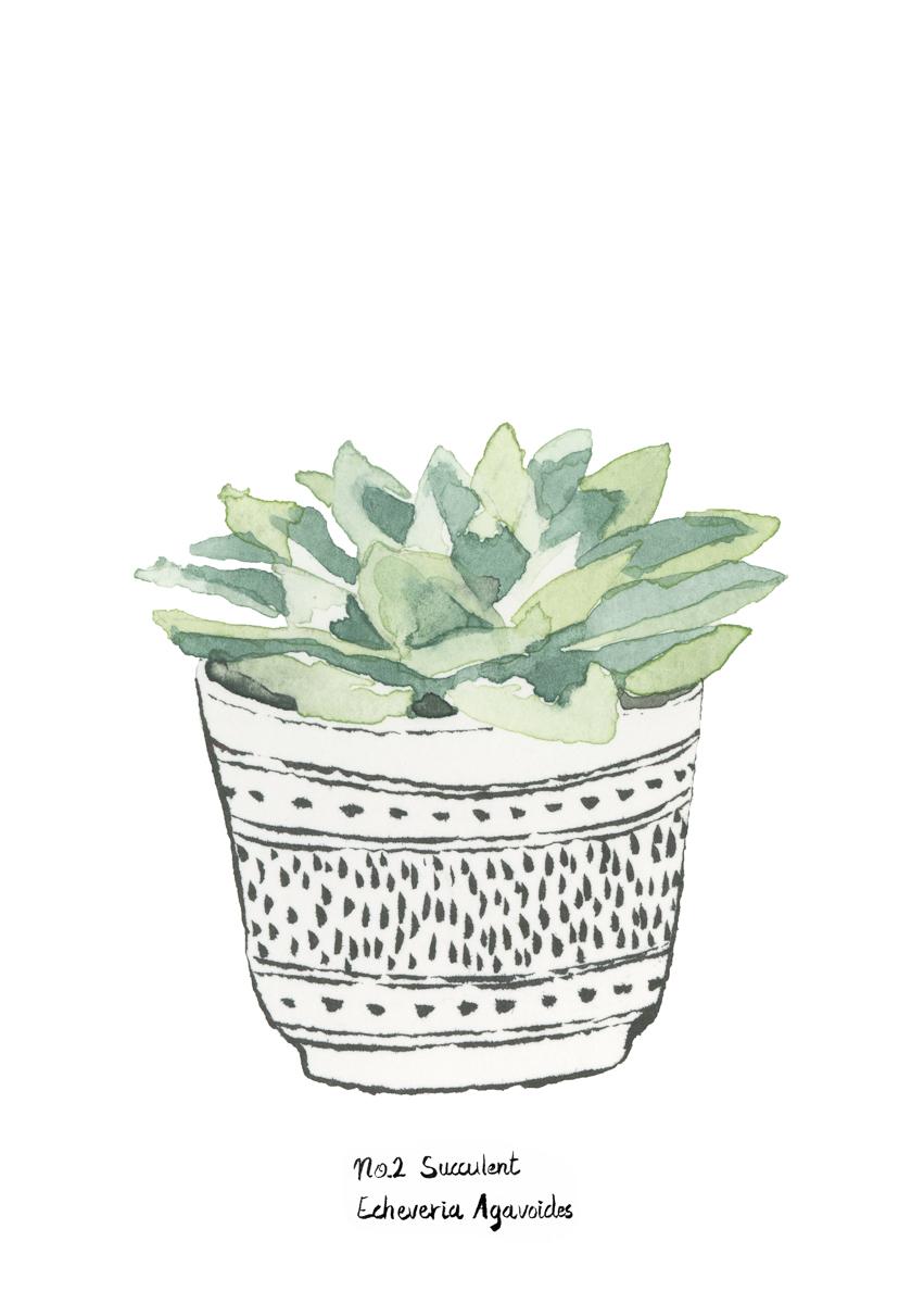 planten-stilleven-plantenillustratie-plantenschilderij-lacabaneenvoyage4.jpg