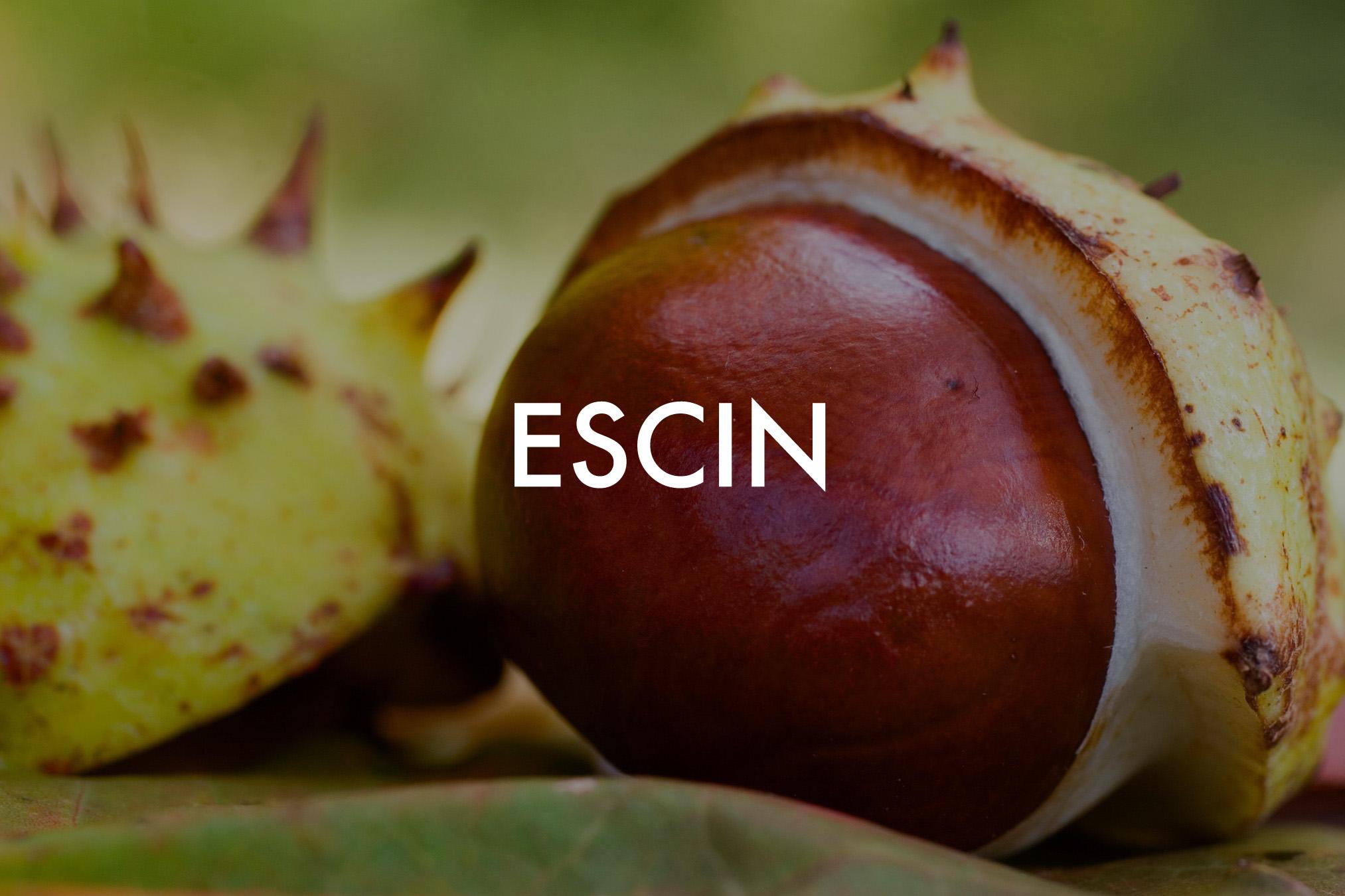 Aesculus hippocastanum (Ho copy.jpg