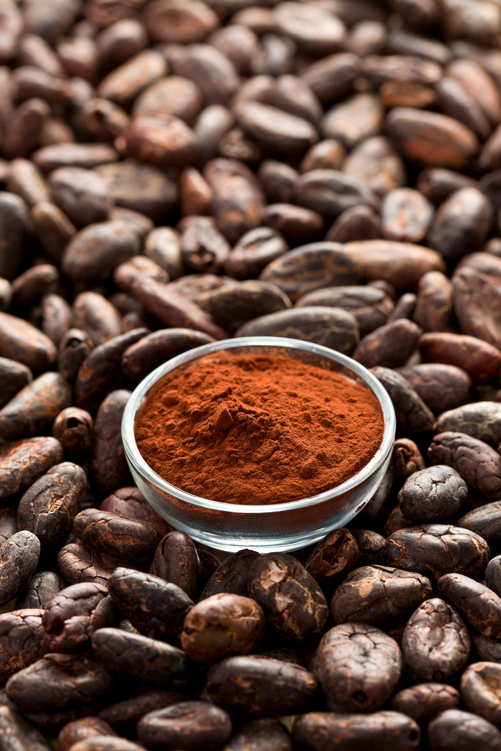 Cocoa bean polyphenol extract is well researched for it's circulation, antioxidant and collagen protecting properties