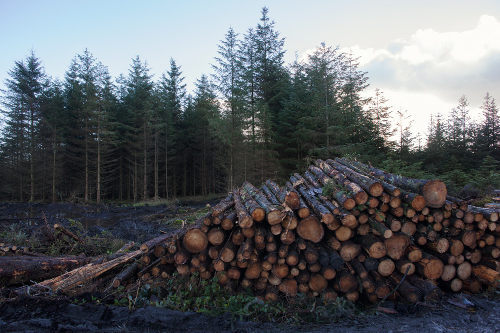 Felled trees, Bragan bog, Special Area of Conservation, County Monaghan, Ireland