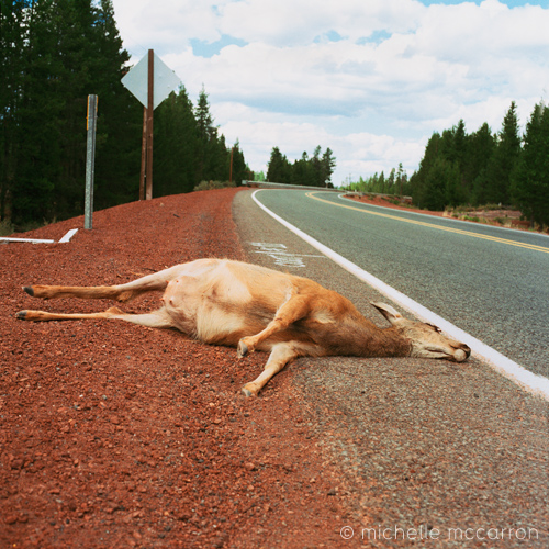Roadkill, Oregon.