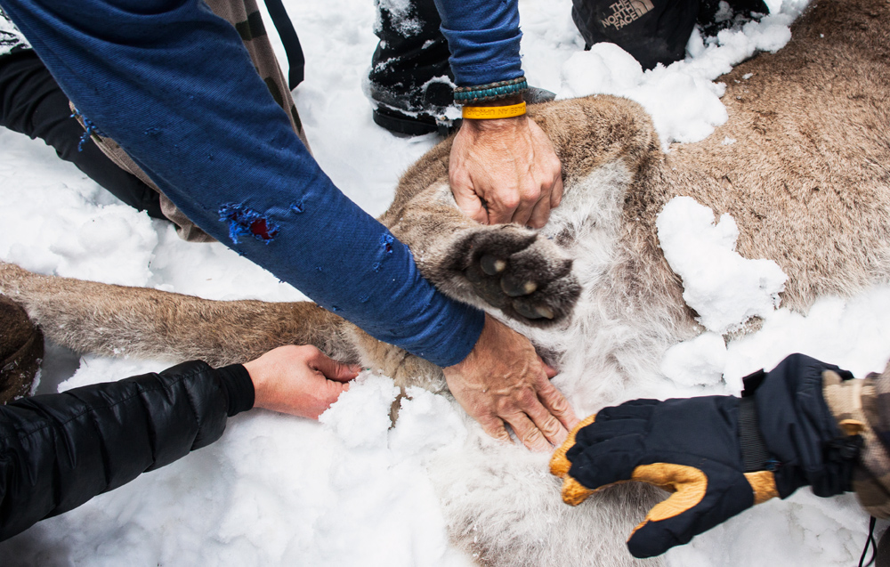 Many hands help tokeepthe M85at a stable temperature and look for a good vein to extract a blood sample from.
