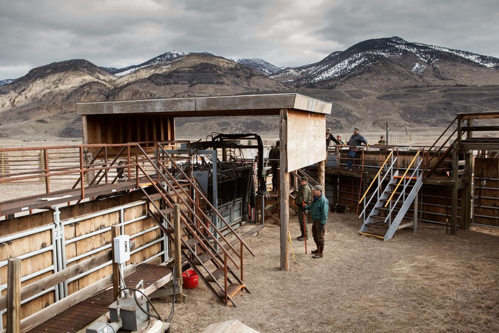 The Stephen Creek buffalo capture facility in Yellowstone National Park