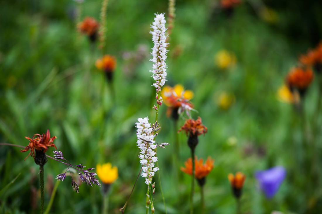 It is estimated that there are 1200 varieties of flora in the Vanoise massif alone.