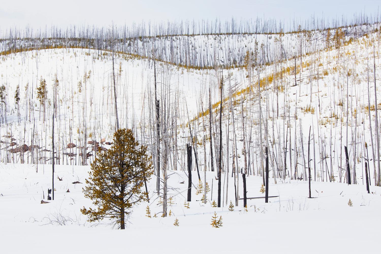 041217_Yellowstone-9411.jpg
