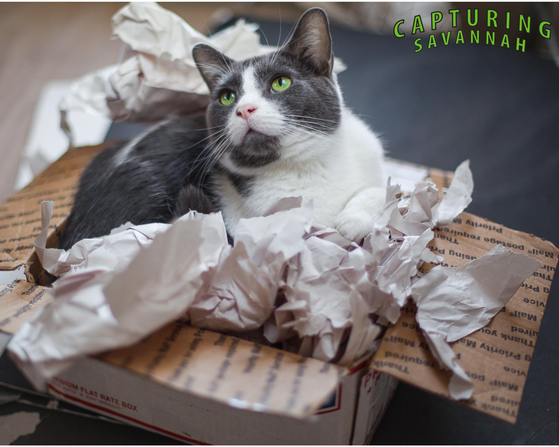 Capturing Savannah_photo-blog_Nicco-cat.1.jpg