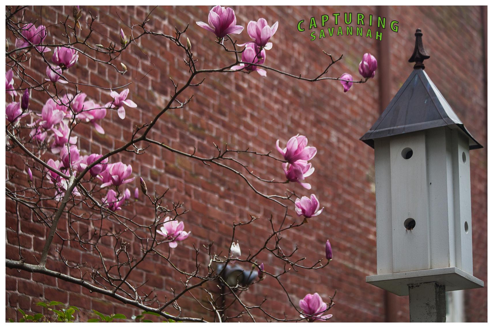 ©2014 Capturing Savannah_Spring-flwrs.3.jpg